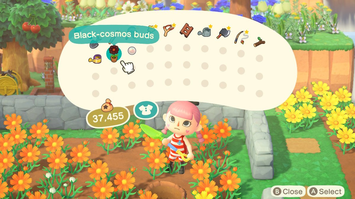 I FINALLY GOT MY FIRST BLACK COSMO #AnimalCrossing #ACNH #NintendoSwitch https://t.co/7YcWkPV86W