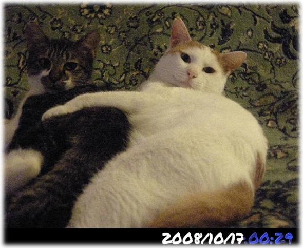 New記事「保護猫3匹はカウントダウンに入っているかもしれない」UP。更新が遅れたのは、遺品整理に手間取り、区切りがつかなかったからでした。そんな猫の郵便にポチクリと関心とご支援を!