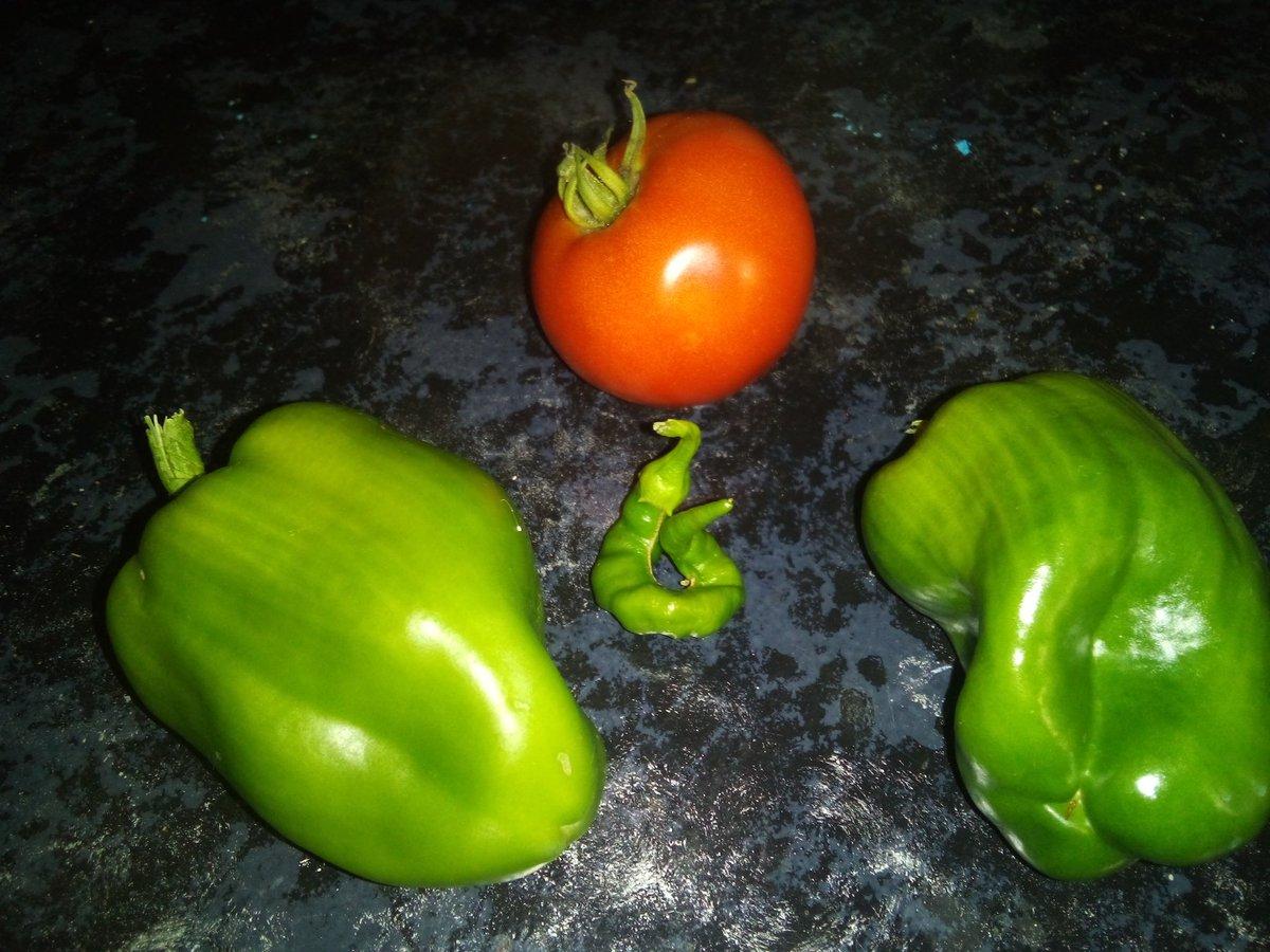 Today's #garden picking #GardenersWorld #gardener #peppers #Tomatoespic.twitter.com/jYgkSizIau
