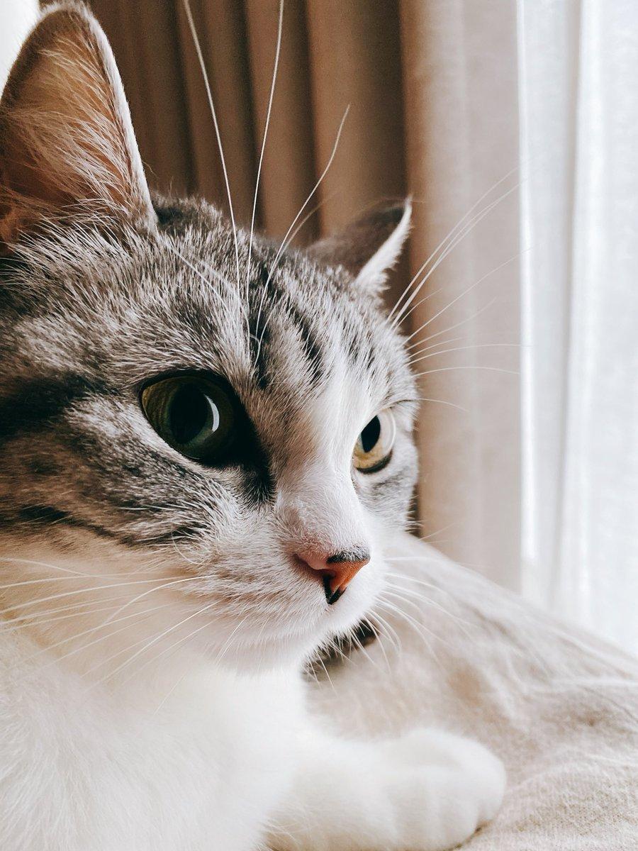 おはよう猫