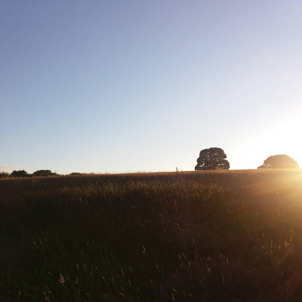 From last night's walk. Look, blue skies! Not raining!!!  #countryside #countrywalk #blueskies #fields #summer #Wales https://t.co/ChklCuEDYs https://t.co/bbBTqvb8sh