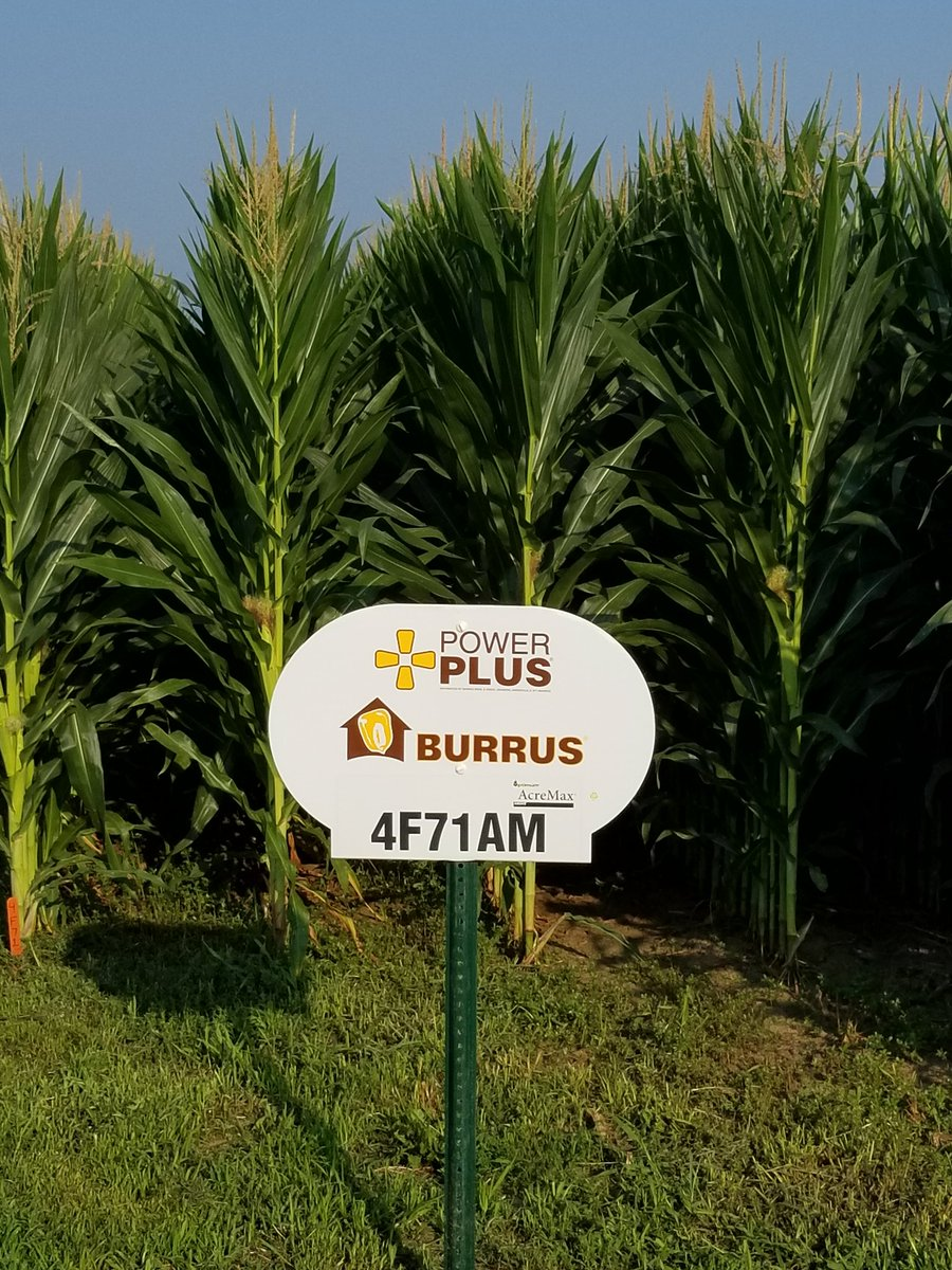 Burrus research team predicts big things with Power Plus 4F71. 109 RM product that has best in class emergence ratings, above ground Insect protection,  consistent yields and a nice fall look. Best fit is your high productivity  fields. #Thinkburrus<br>http://pic.twitter.com/b9Ziwu0Kl0