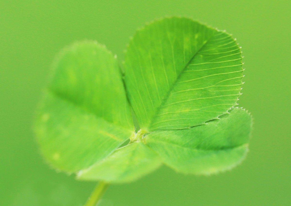 教会の庭で見つけた四つ葉のクローバー。皆さんにもおすそ分けです(^^)