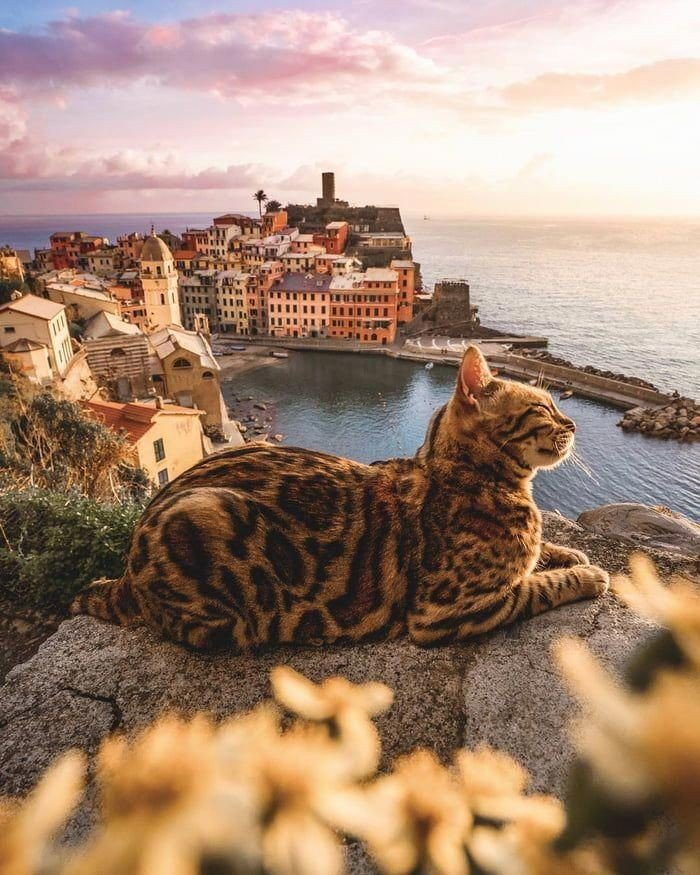 A cat with a view  Happy #Caturday #cats #CatsOfTwitter <br>http://pic.twitter.com/fW53LvwwfF