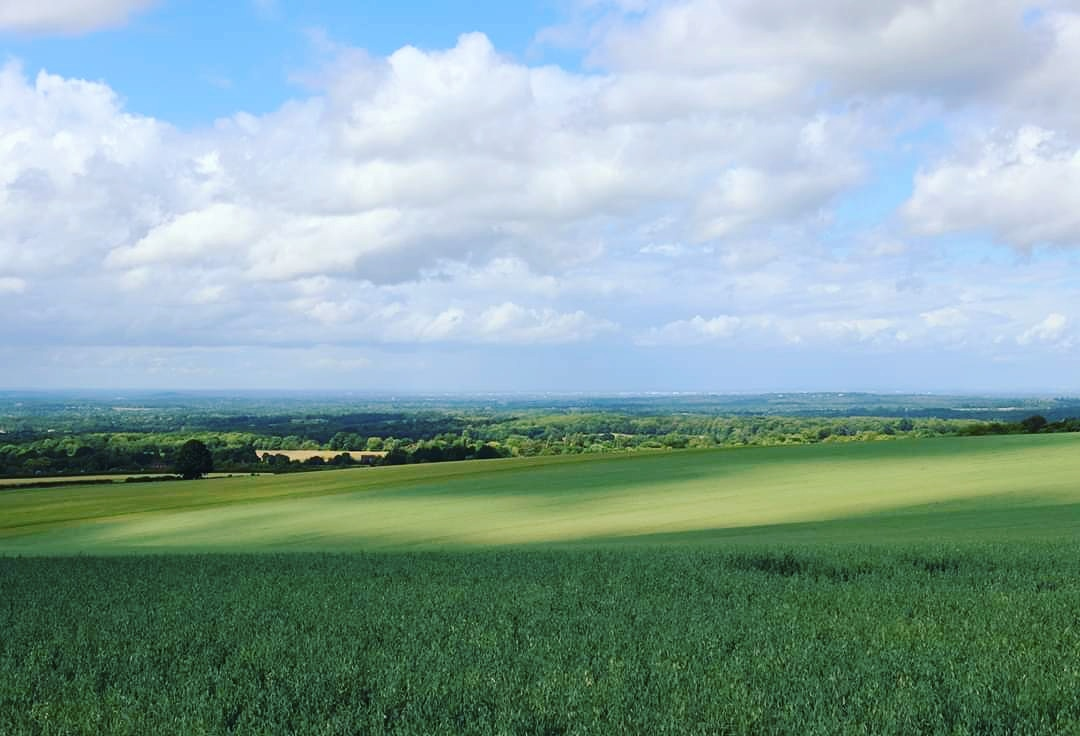 Summer in Clandon #walking #nature #clandon #clouds #cloudporn #naturephotography #summer #hike #natureperfection #uk #sky #fields #summerskies https://t.co/R2VJ16Z20t