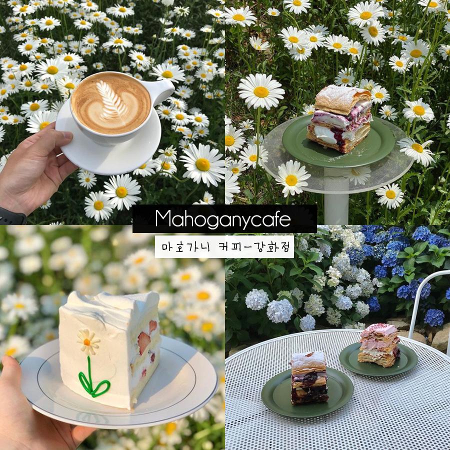 #เซฟไว้ก่อนค่อยไปตาม #รีวิวเกาหลี #คาเฟ่เกาหลี   ☕ Mahogany Cafe   คาเฟ่ในสวนบรรยากาศชิลๆนอกเมืองเหมือนอยู่ยุโรป  Mahoganycafe by Dore Dore สาขาคังฮวา ร้านตั้งอยู่บนเกาะคังฮวา ไม่ไกลจากเมืองอินชอน  (🌙) https://t.co/fer5iQqKjP  🚇 แผนที่ร้าน :  https://t.co/bKRnbKha3c  . https://t.co/DP3WVHp3Hi