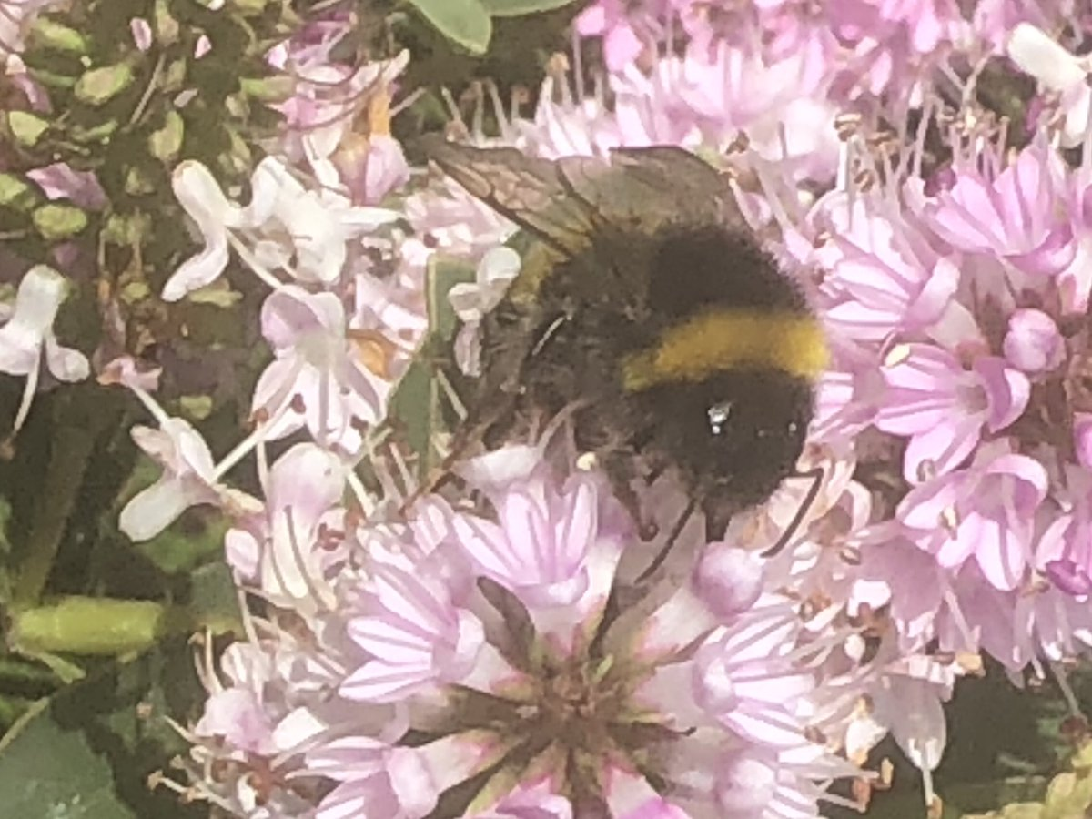 Bees on flowers in the garden are one of nature's great sights. Could sit and watch them for hours