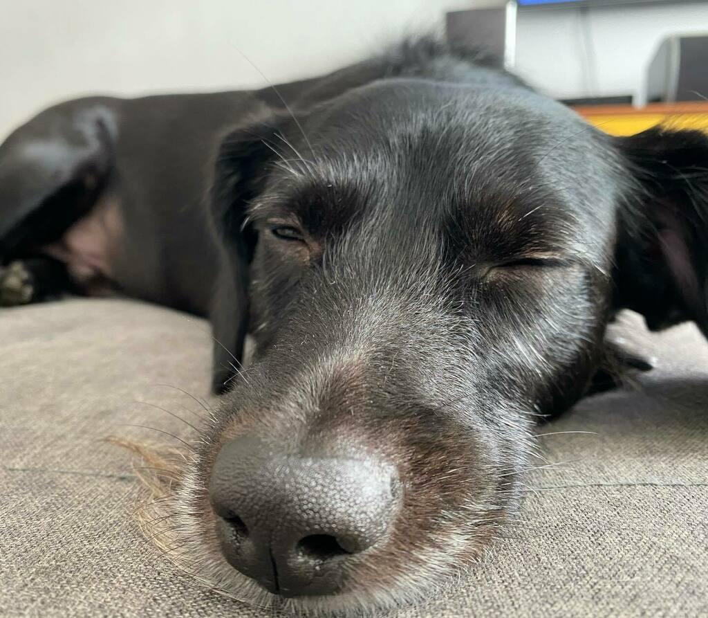 Paz se quem nunca será abandonado! #dogsofinstagram #dogs #dogsofinstaworld #dog #dogs_of_instagram #dogstagram #dogs_of_world #doglovers #dogoftheday #dog_features #catiororeflexivo https://instagr.am/p/CCgZQ6gjoqz/pic.twitter.com/mjziOXXP6I