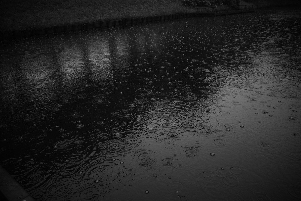 #photograph #photography #photo #ricoh #gr3 #monochrome #blackandwhite #monochromephotography #blackandwhitephotograpy #ファインダー越しの世界 #写真好きな人と繋がりたい #写真 #melancholy #dark #gallery_of_dark_arts #pond #trees #rain #rainyday  #silhouettepic.twitter.com/ipuKt6DElz