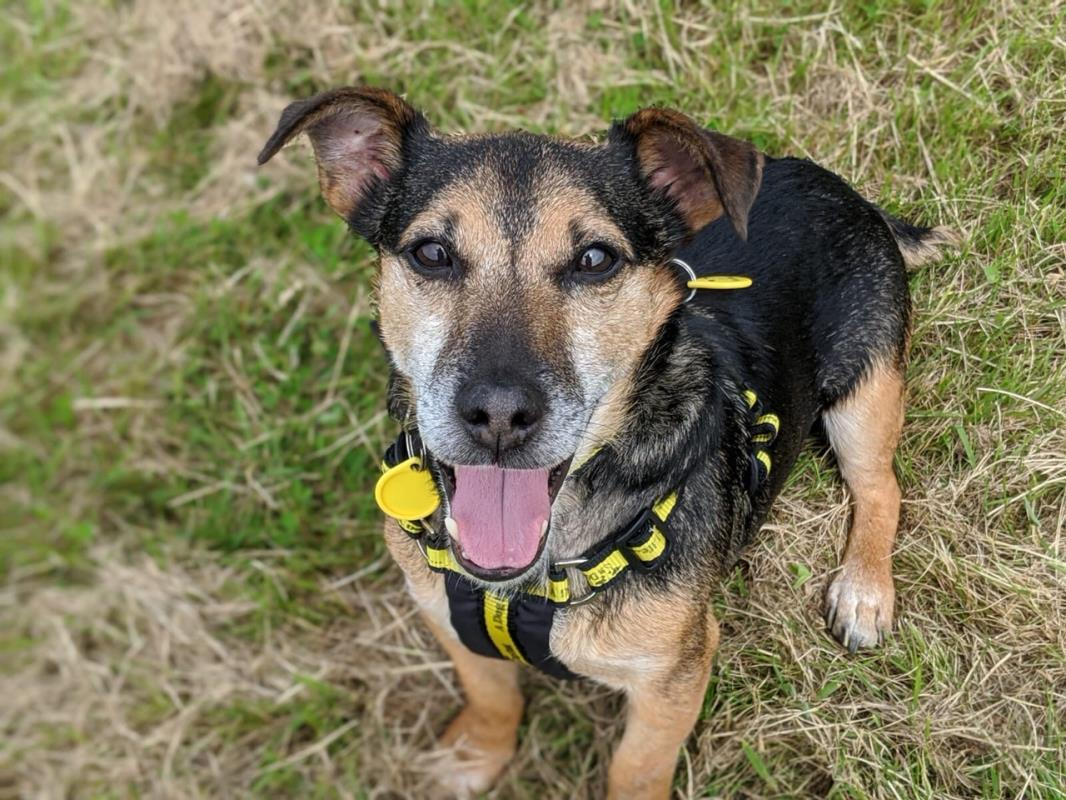 Meet Mack 🏠 Mack is looking for a quiet life 💛 A quiet home away from strangers and lots of quiet walks away from other doggos 🐶 @DT_Glasgow 📍 bit.ly/2VZgNae Our new rehoming process 👉 bit.ly/2SBrL4e