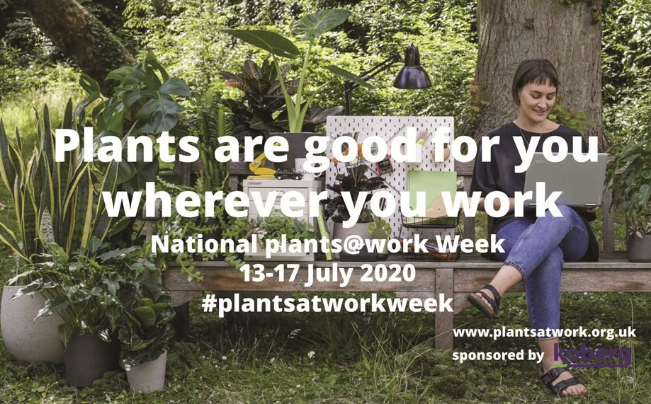 Plants Are Good For You Wherever You Work  and next week we will be joining in with @plants_atwork and @kobergbv celebrating National Plants at Work Week 13-17 July 2020  #plantswork #workplace #plantsatworkweek.pic.twitter.com/1RenyVjOS4