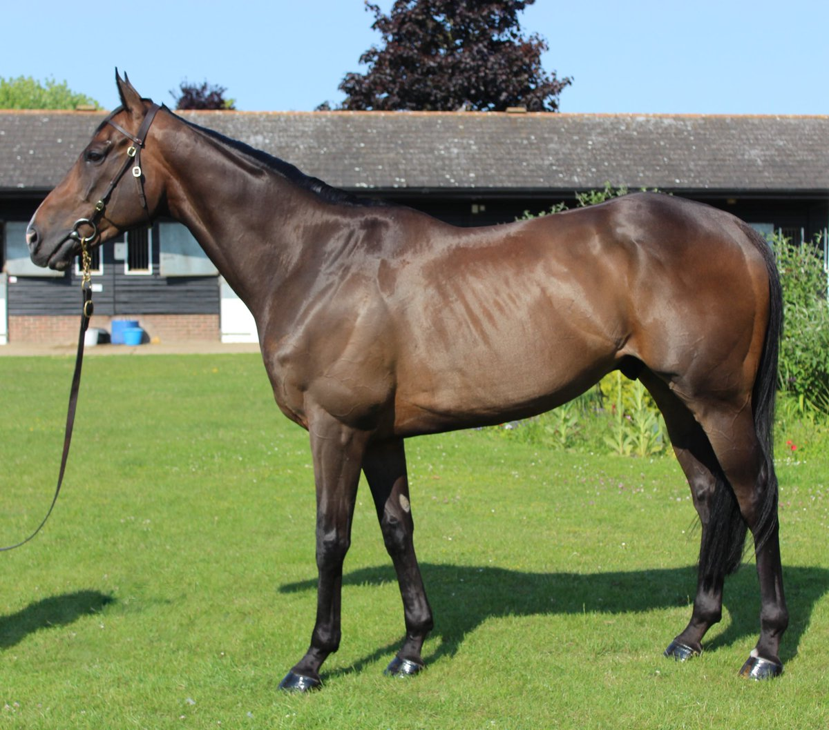 Excited to have our first Pimlico Racing horse in Ireland with @JosephOBrien2! Purchased @Tattersalls1766 yesterday, the 86-rated Lamloom is a talented recruit to run in some of the big handicaps this term. DM for details!
