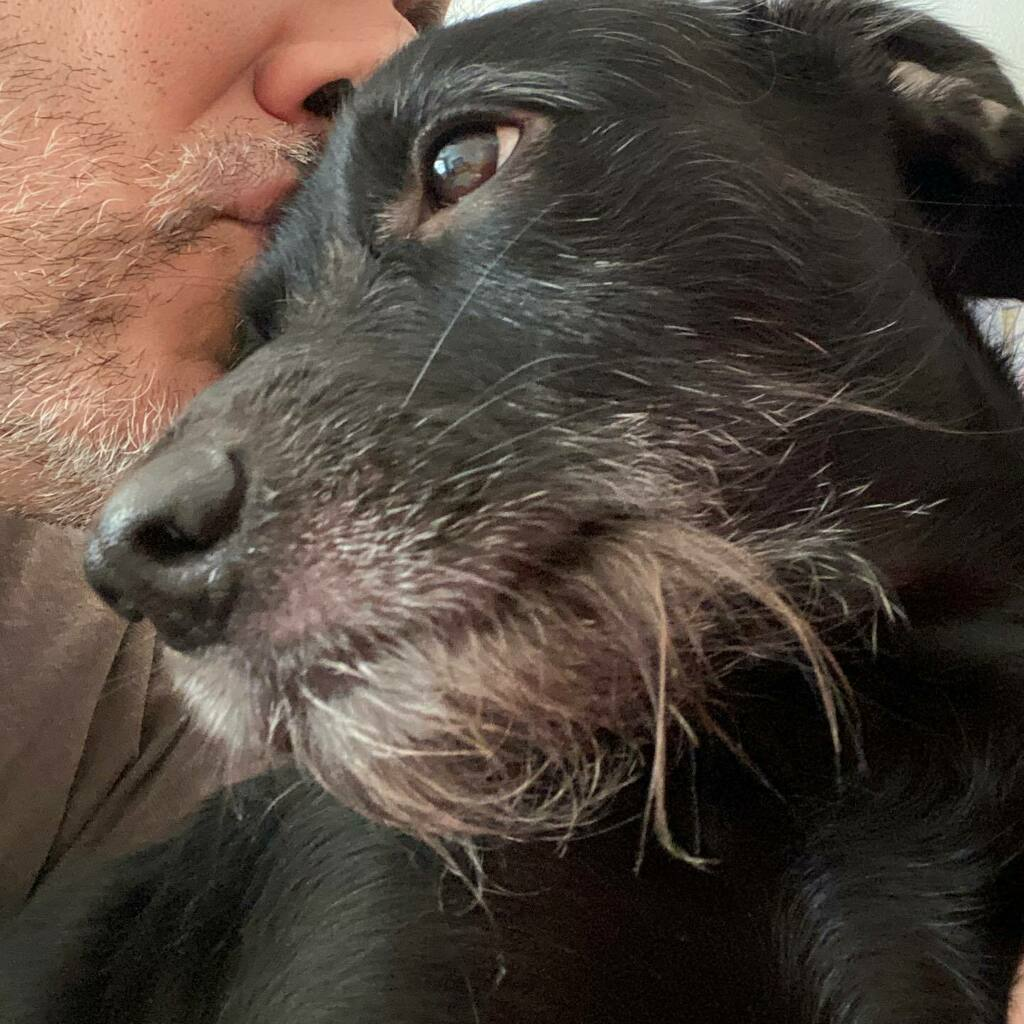 Good morning, world! #dogsofinstagram #dogs #dogsofinstaworld #dog #dogs_of_instagram #dogstagram #dogs_of_world #doglovers #dogoftheday #dog_features #catiororeflexivo https://instagr.am/p/CCgFgjljgKJ/pic.twitter.com/VRNyDA0mvd