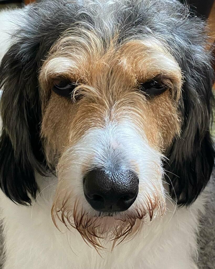 Good morning! #dogsofinstagram #dogs #dogsofinstaworld #dog #dogs_of_instagram #dogstagram #dogs_of_world #doglovers #dogoftheday #dog_features #catiororeflexivo https://instagr.am/p/CCgFj34DmJO/pic.twitter.com/8wkrMqNogJ