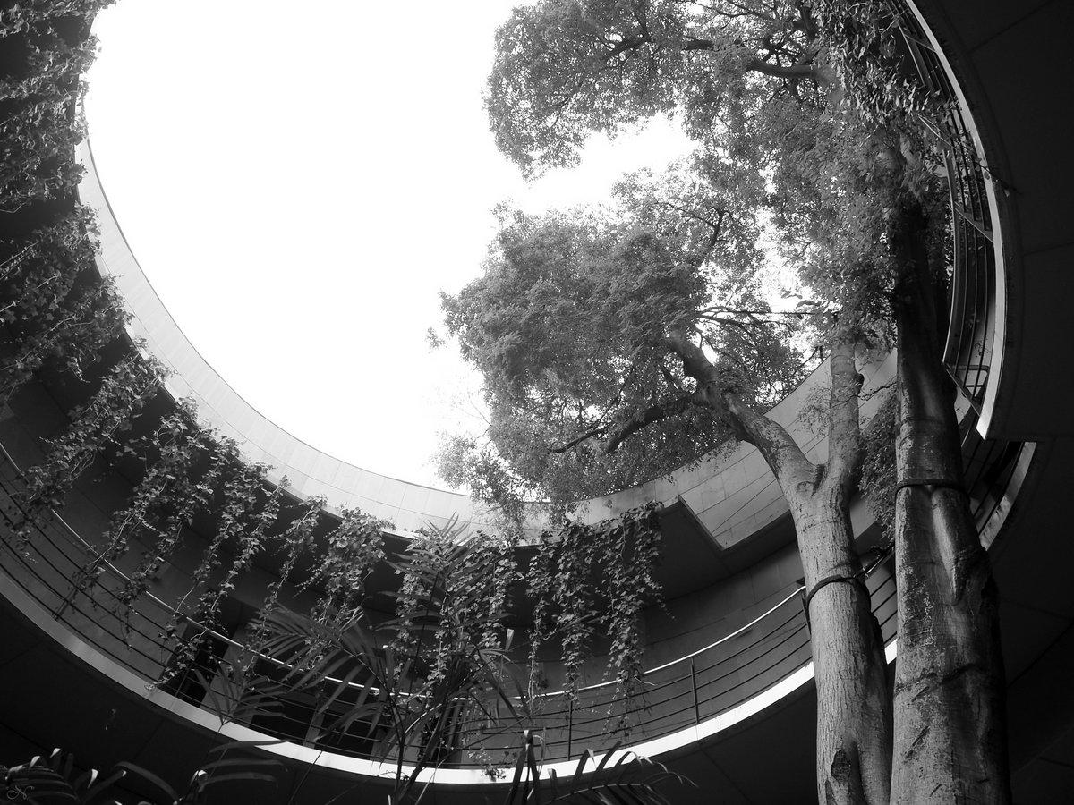 Entrada #JardínBotánico #JardíBotànic #Valencia #cactus #crasas #succulents #fotografía #photography #blancoynegro #blackandwhitephotography #blackandwhite #bw #monochrome #monochromephotography pic.twitter.com/V0FYgjVZBD
