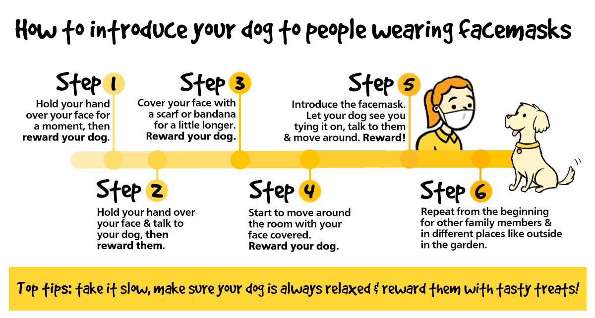 Dogs are really good at reading our facial expressions to tell how we're feeling, so they might be confused to see people wearing face masks 😷 Heres how to teach your dog that masks are nothing to worry about ⬇️➡️ bit.ly/3d58u2n