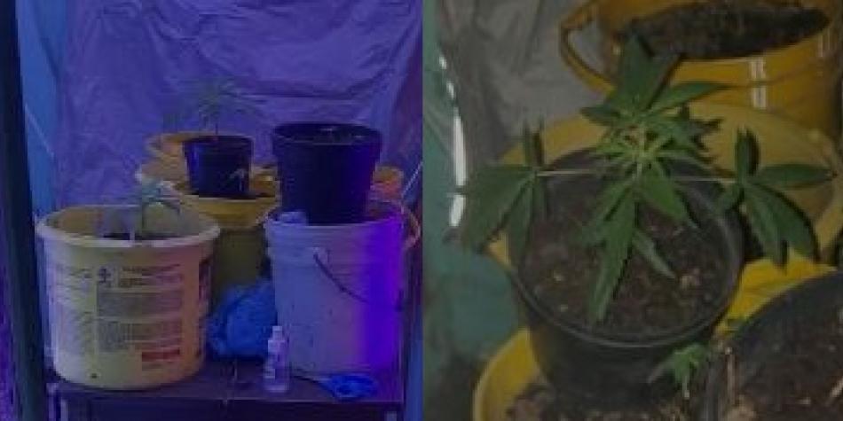 Hallan sofisticado cultivo de marihuana en una vivienda del centro. Esto fue lo que encontró la Policía de Bogotá hizo el hallazgo en la localidad de Los Mártires. 👉 https://t.co/6ji7E85qeQ https://t.co/wXUTx46Lib