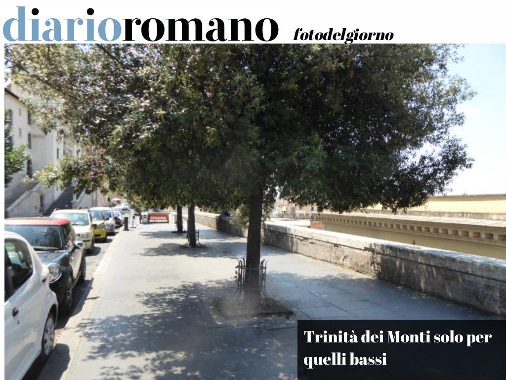 test Twitter Media - La mancanza della minima manutenzione ai lecci di Trinità dei Monti costringe chiunque sopra al metro e mezzo a piegarsi per passare. . #Roma #foto #lettori 📸 https://t.co/gHJTZm9J05