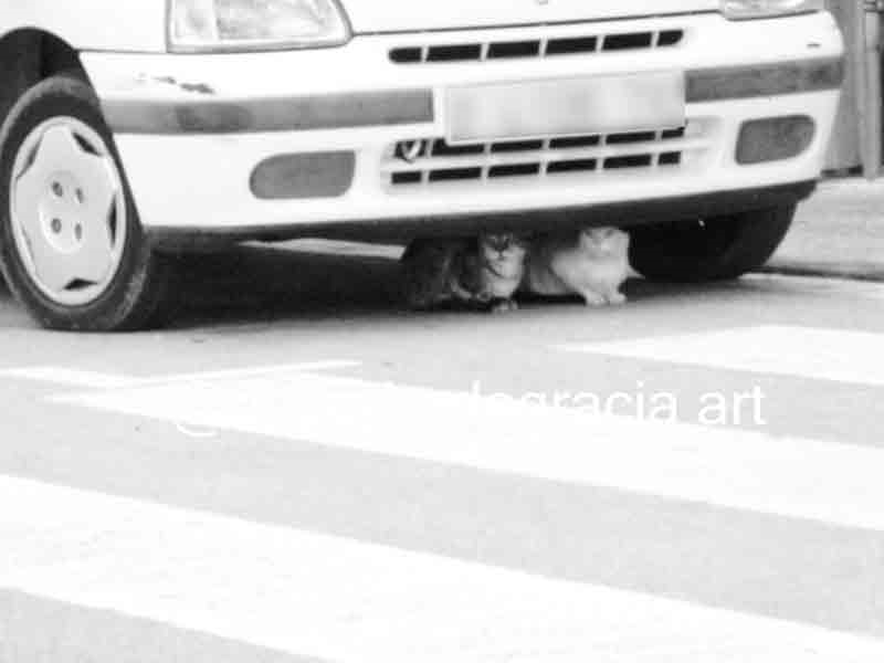 #art #artist #photo #photography #blackandwhitephotography #blackandwhitephoto #monochrome #streetphotography #streetphoto #urbanphotography #urbanphoto #animals #cats #caturdaypic.twitter.com/X0oEiz2OGF