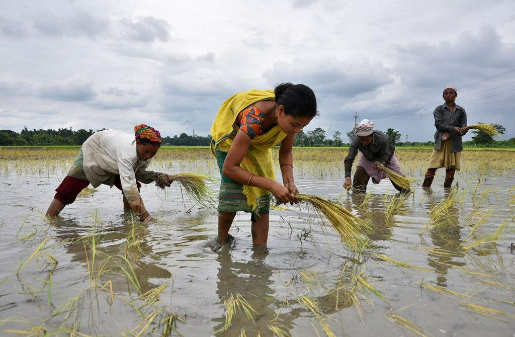 After vigorous monsoon rains, crop planting gathers pace in India https://t.co/VttC0AtqaY https://t.co/s66SAJQS0I
