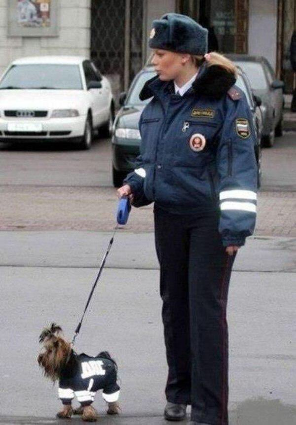 #Russian Police Patrol Dog !!! pic.twitter.com/QY0BTrGuhF