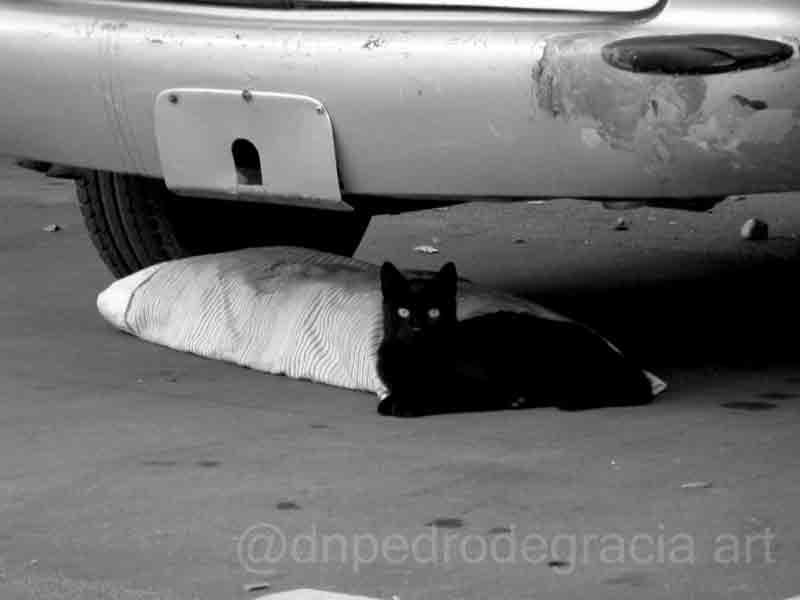 #art #artist #photo #photography #blackandwhitephotography #blackandwhitephoto #monochrome #streetphotography #streetphoto #urbanphotography #urbanphoto #animals #cats #Caturdaypic.twitter.com/e2rhc3HVDn