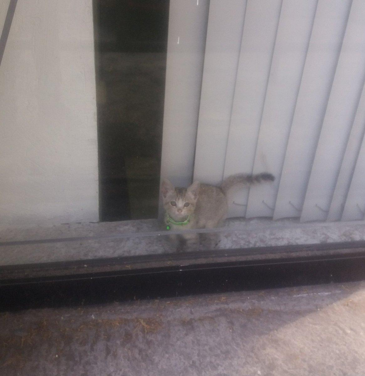 Amingus, este gatito lleva al menos desde ayer encerrado en un sótano/bodega de la sucursal de @Citibanamex que está en Flores Magón y Dr. Atl. Supuse que ayer alguien lo dejó guardado en lo que trabajaba, pero sigue ahí. ¿Cómo nos aseguramos que el gatito esté bien? https://t.co/tVpkPeTrYz