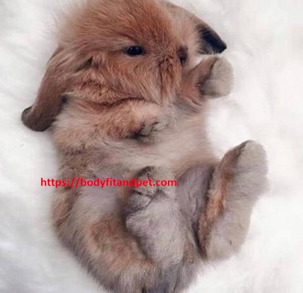 #bunny #weeklyfluff #cute #dailyfluff #dailyflufffeature #rabbitsofinsta #rabbitsofinstagram #love #adoptdontshop #rabbits #cats #bunnies #catsofinstagram #kittensofinstagram #kittens #catsofinsta #deardiary #rescuecat #fluffofinsta #catsandrabbits #kittensofig #catdiarypic.twitter.com/QP4B9KfM1W