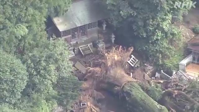 岐阜県瑞浪市にある「神明神社」で樹齢1000年を超えると言われる杉の木が根元から倒れ、家屋などに被害が出ています。県の天然記念物にも指定されていて、町のシンボルのような存在だったということです。#nhk_news