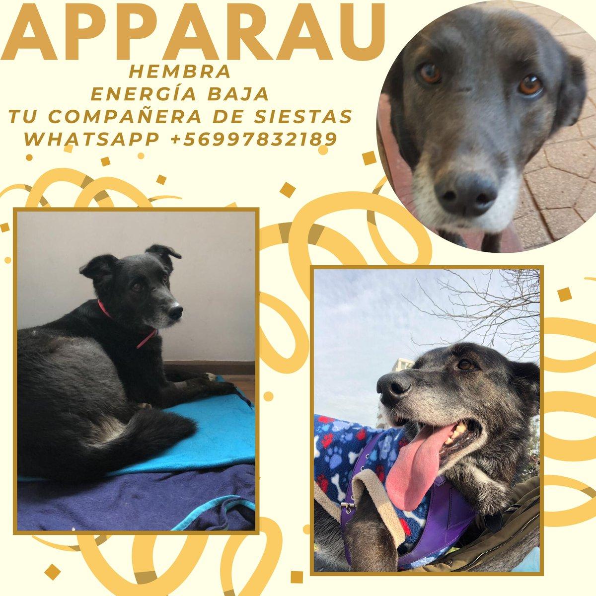 RT por favor. ayudemos a que encuentren un hogar amoroso!! mascotas rescatadas en adopción. STGO. @denissemalebran @carolinapinoc @bartorell @PerrosPlazaHuem @pewos @Kristian_Mella @kattykowaleczko @eltuitdemarsh @KathySalosny @KarendTV @KARENBEJARANOTV https://t.co/cZ0oS3jJQb