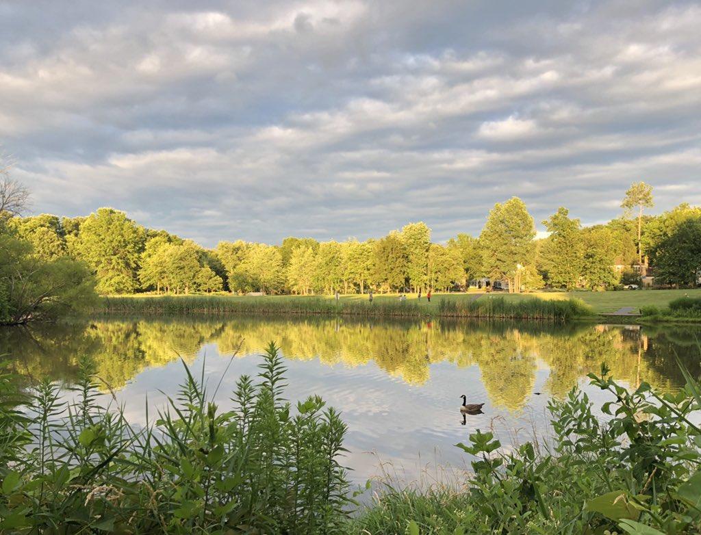 Gorgeous lighting at Franklin Pond in Herndon this evening. Complete with bonus goose. #FarmLife #pond #myneighborhood #gooutside @capitalweather @ABC7Alexpic.twitter.com/LndRQJtoff