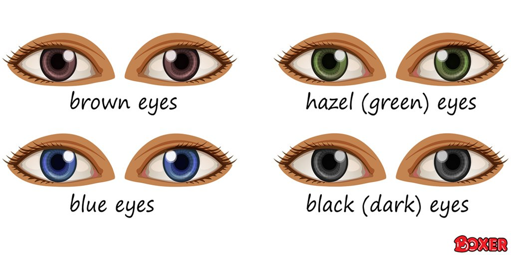Today is different coloured eyes day! What colour are your eyes? https://t.co/4XlhQGFfCv