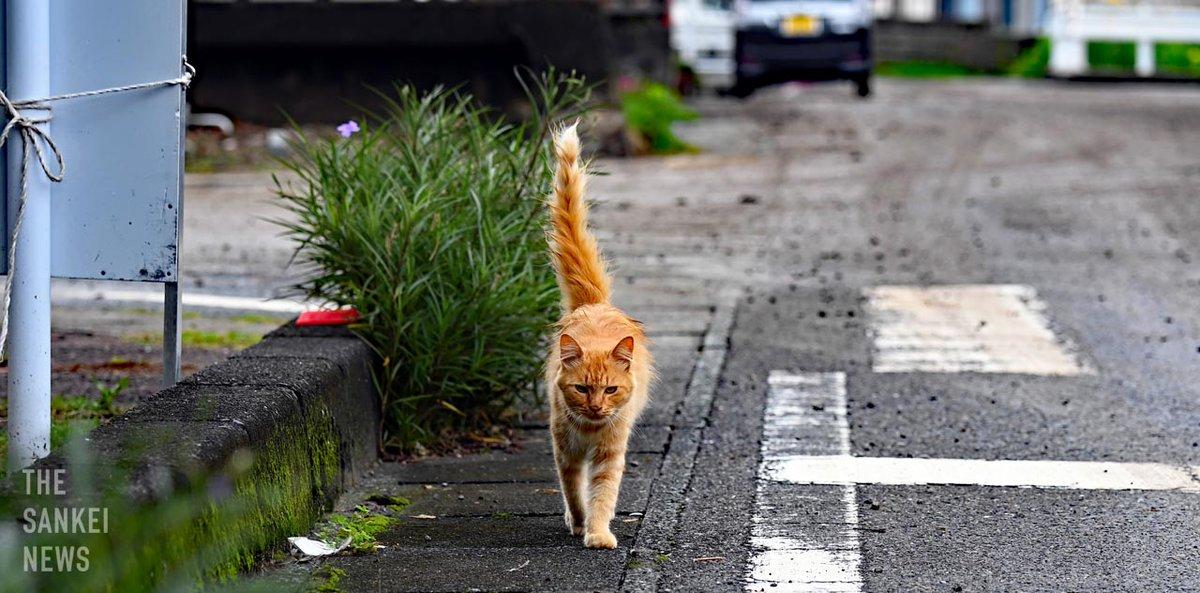 【#九州豪雨 被災地から】熊本県 #津奈木町 では、#猫 が寂しそうに歩いていました(2020年7月12日撮影) https://t.co/bOupiOkfaa