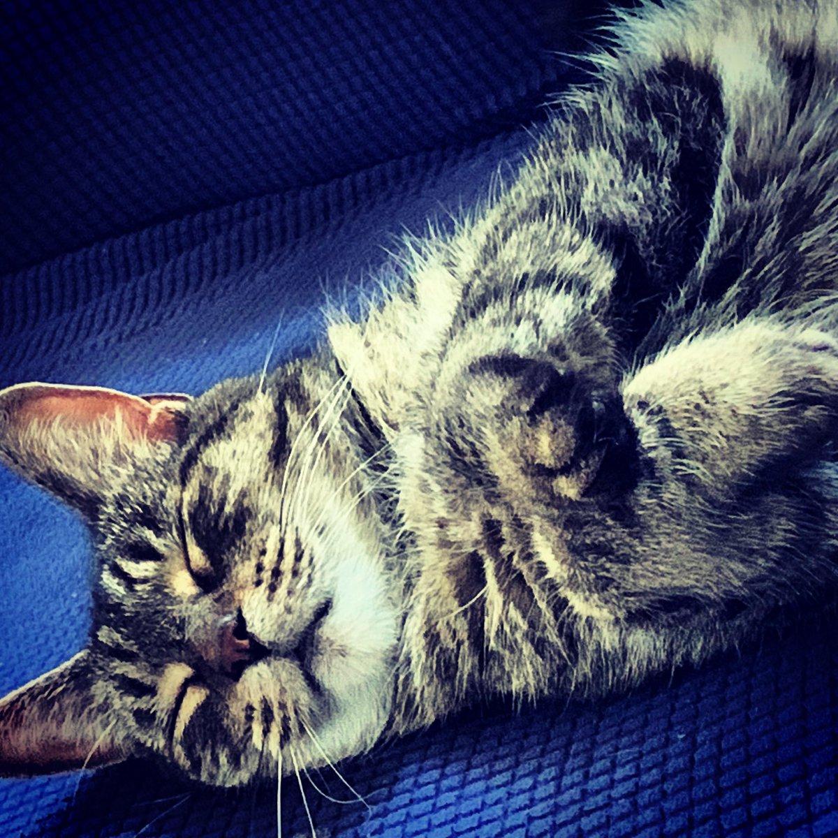 Happy #Caturday all 🐈 #cats #catsofinstagram 😀 💗 . . . . #theweekoninstagram #photosonmyphone #randomtags #cutepetclub #cutecats #catmom #catsofig #cats_of_instagram #instacute #instapic https://t.co/zrZCOjGMoh