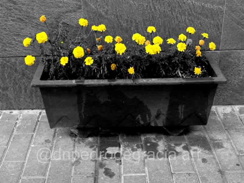 #art #artist #photo #photography #blackandwhitephotography #blackandwhitephoto #monochromme #streetphotography #streetphoto #urbanphotography #urbanphoto #cutoutpic.twitter.com/PZI9adx6tw