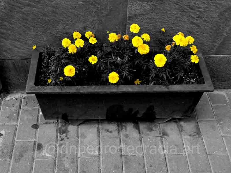 #art #artist #photo #photography #blackandwhitephotography #blackandwhitephoto #monochromme #streetphotography #streetphoto #urbanphotography #urbanphoto #cutoutpic.twitter.com/bvRgwaNfbC