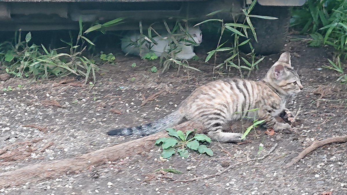 cute kittens @PARADOX56247498pic.twitter.com/Iaq7Ur1h0R