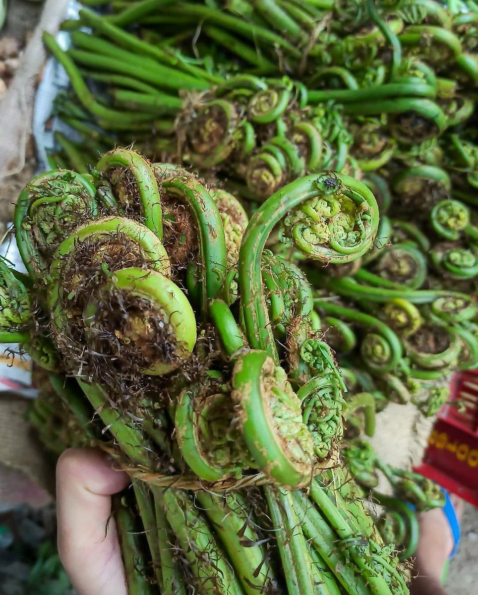 we Pahadi can't survive without these. #Uttarakhand #localfood