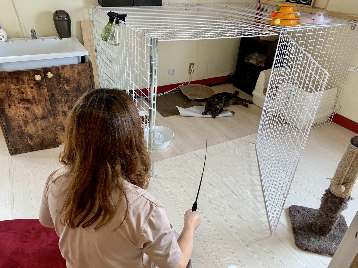 今日もご来店いただき、ありがとうございました🤗  #保護猫 #保護猫カフェ #里親募集中 #里親募集 #三重 #猫 #家族 #保護猫カフェ猫婆 #猫婆 #三重県 #鈴鹿市 #スタッフ紹介 #cats #cat #pet #family