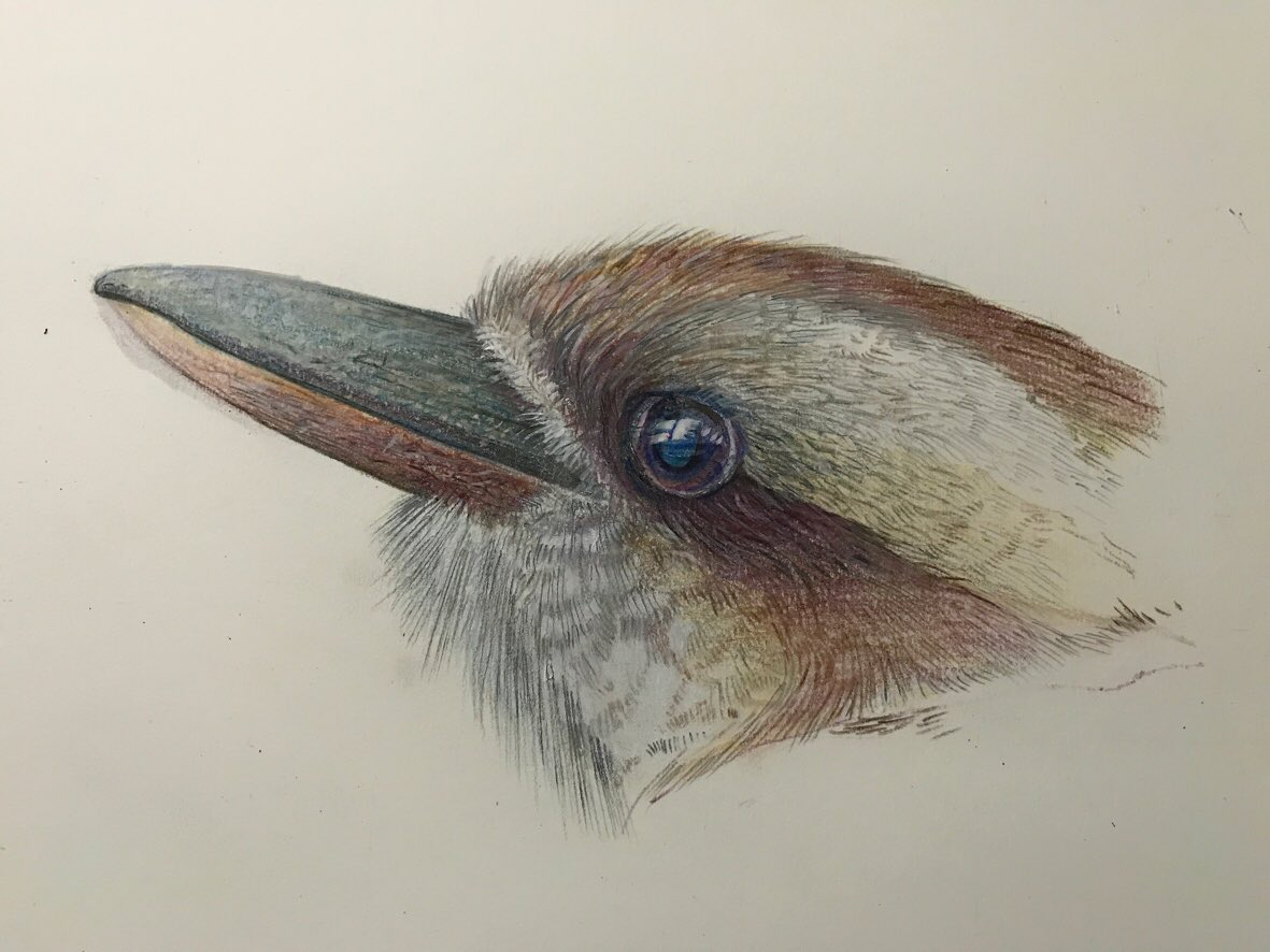 If I draw more birds would people wish to buy them ?  J  #Artist pic.twitter.com/rv52P00ZRl