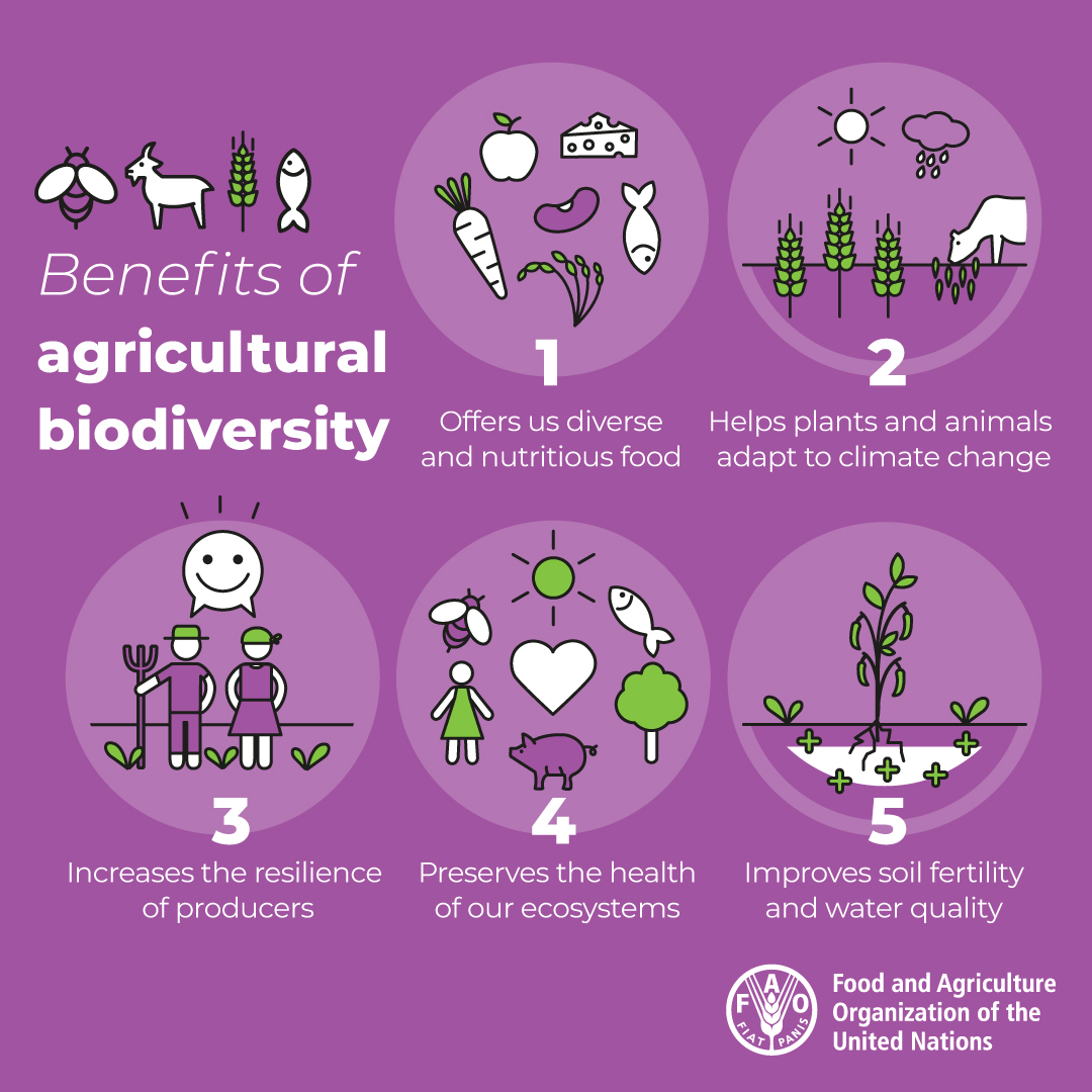 Maintaining #biodiversity means: 🐛 Healthy ecosystems 👩🏽🌾 Resilient rural livelihoods 🥕Nutritious food Our future of food depends on it. #Biodiversity2020