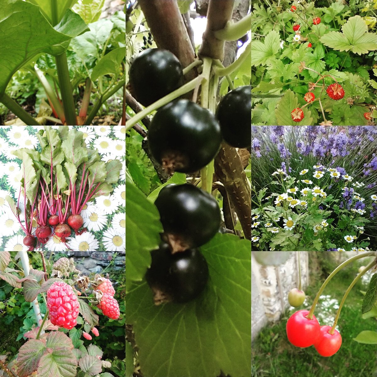 So many great flavours in the garden this #july! Gardening is more than just #food & #drink, more than just about running a #smallbusiness. It's #health #exercise #mentalhealth #environment #nature https://t.co/1ZIk9XykSy