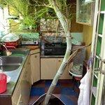 フローリングから竹が?!1ヶ月ぶりに訪れた祖父母の実家で見たという衝撃的な光景!