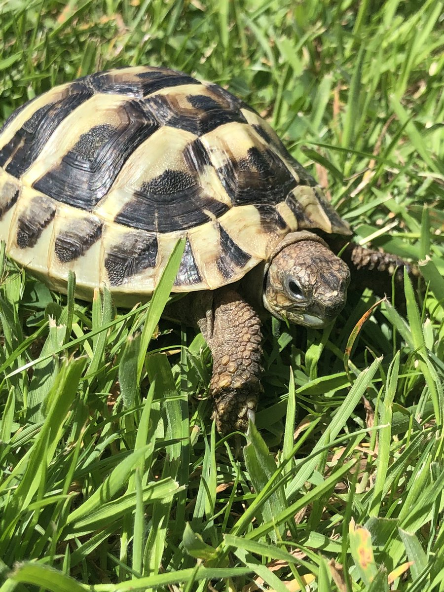 @DanBuryTomorrow Our new addition-Linford! 🥰🐢
