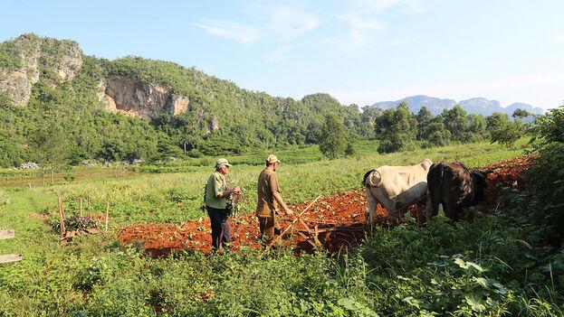Aquí les compartimos una de las notas que ha generado más interés en nuestros lectores en los últimos días: Los guajiros deberán suministrar alimentos a las bodegas del mercado racionado.  👉🏻👉🏻👉🏻👉🏻   https://t.co/DiSlgwGOW3 https://t.co/9LrJK4yXqA