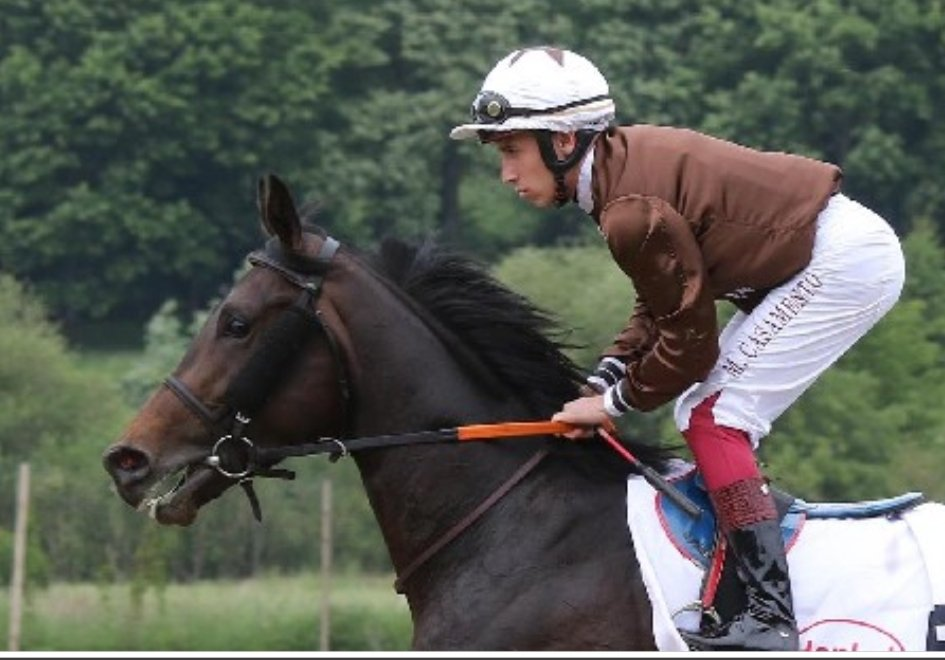 Walderbe 🐎 4yo c, Maxios - Waldfee (Dai Jin), owned by Stall Düsseldorf Fighters 🇩🇪 trained by Ralf Rohne 🇩🇪 won the Gr.3 Premio Carlo D'alessio at Rome 🇮🇹 @coolmorestud https://t.co/BWXtf2NGzQ