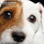 Image for the Tweet beginning: This past year, American Humane