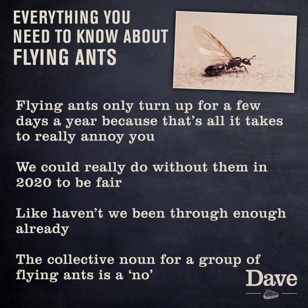 Flyingants Hashtag On Twitter