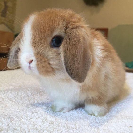 I bought the dip #bitcoin #bunnies pic.twitter.com/fh0XUK1IaH
