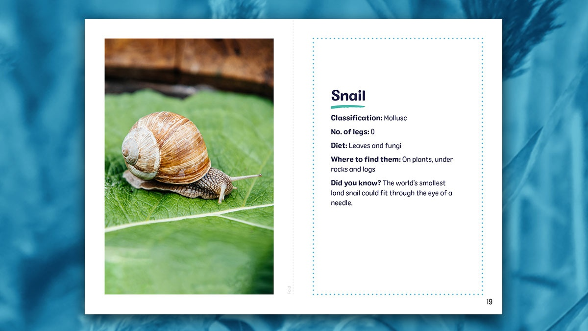 Our next set of home-schooling resources will be released tomorrow morning! Curriculum linked, parent-friendly materials, available on the #WWTHomeLearning hub. This week we learn all about minibeasts 🐌 socsi.in/4Helu